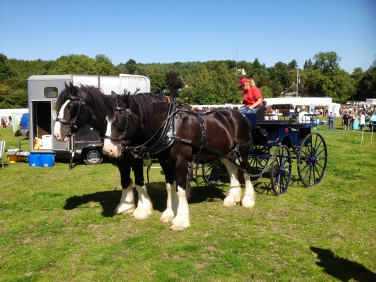 These gorgeous horses provided rides all day at the British Family Fayre - love them