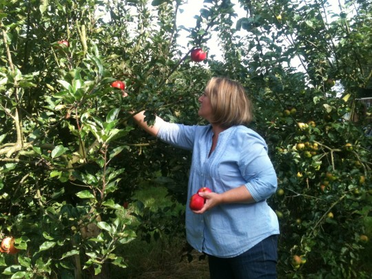 Thank you to Little Stour Orchard for the scrummy discovery apples